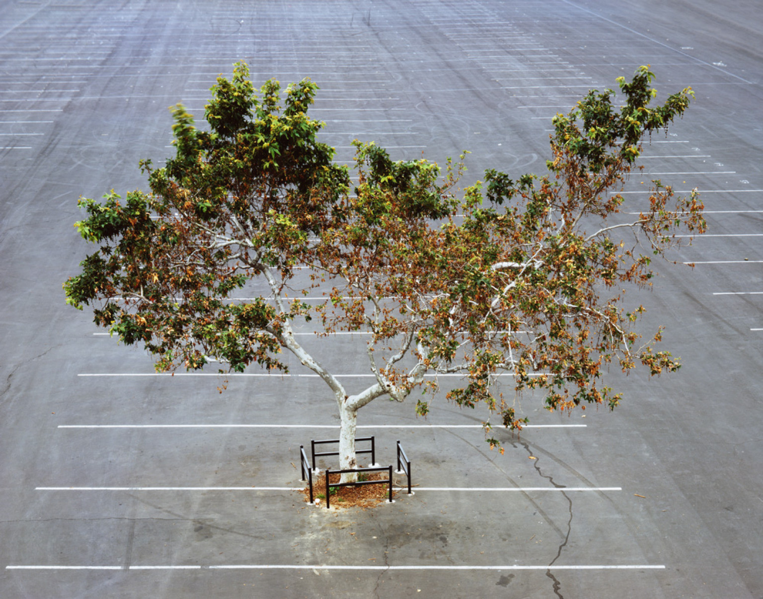 Joel Tauber   My Lonely Tree